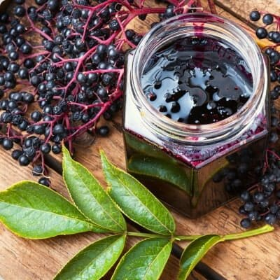 ElderBerry For Immunity